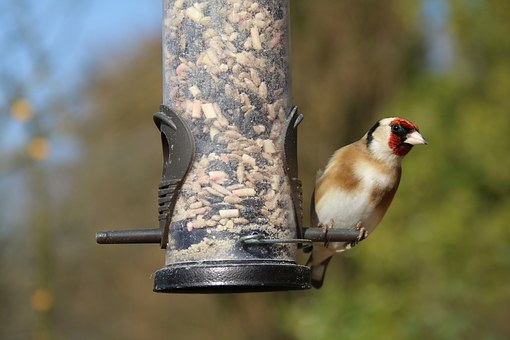 goldfinch 1251025 340