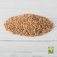 Laverock Bird food - Wheat-1